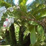 Orchidée du jardin