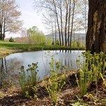 our woodland pond