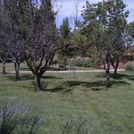 Partial view of the orchard with mule deer