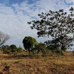 arbres de l'Ankarana