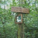 Many hiking paths