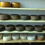 A selection of wine aged cheeses