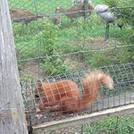 wiewiórka sama przebiegła