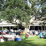 Late afternoon lawn under the big Oak
