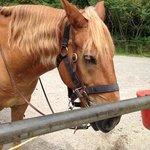My horse Pedro