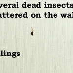 dead splattered insects on wall and ceiling