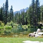 Big Springs Garden pond