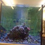 Reef tank at sushi hi