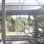 Caged Native Parrot