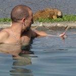 iguane au bord de la piscine