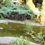 Garden (lots of Musquitos)
