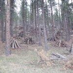 Foto de Elk Haven Cabins