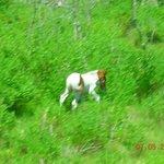 Pony from bus window
