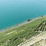 Vineyards between Grandvaux and Rivaz