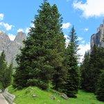 Arredores de Cortina