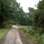 New forest Ocknell area