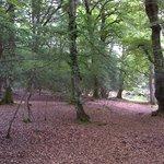 Dear Stalking, Ocknell campsite , New forest