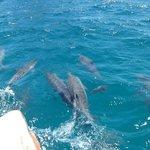 M A R A V I L H O S O    com os golfinhos a frente do barco.