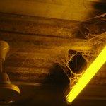 cobwebs in Ladie's toilet
