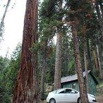 Forest Glen historical cabin