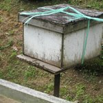 One of the bee houses
