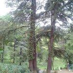 Tea Garden across T-Bud