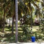 il palmeto