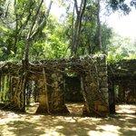 árvores nas ruínas