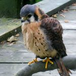 Festival Park Owl Sanctuary