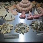 Photo de Bali Shell Museum