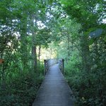 Paths to view wildlife