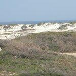 California Sand Dunes3