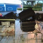 A old rusty nasty shopping cart is use to take the luggage to the room.. How disgusting worst pl