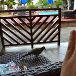 La terrasse avec leur pigeon