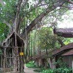 monkey tree houses
