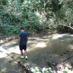 Adventuring across a falling tree across the Inland Blue Hole