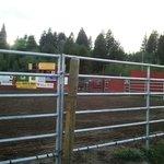 Yellowstone Rodeo - regular seats view