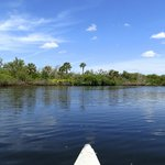 Canoeing on the Estero River
