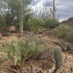 local desert