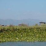 Floating farms at Inlay lake