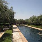 le bassin de nage