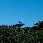 caribou at phillip's garden
