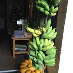 Fresh Picked Apple Bananas & Papaya, Coffee & Banana Bread