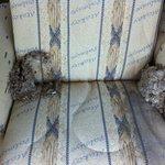 Karı apart ta yuva yapmış eşek arıları. (Boş apart)