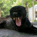 Heaven's Corner Zoo & Animal Sanctuary