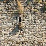 Sorpresas entre las paredes del castillo