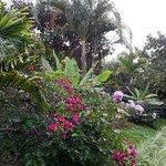 des fleurs sur les sentiers