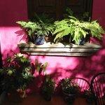 Plants in the breakfast room