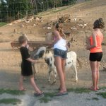 Petting and feeding some of the animals