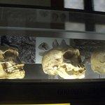 Salle de la préhistoire